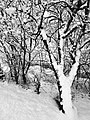 Sinigo Italy the snow in South Tyrol Photo by Giovanni Ussi (41).jpg