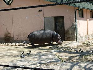 Skopje Zoo - Image: Skopje Zoo 2