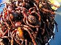 Skun spiders closeup.jpg