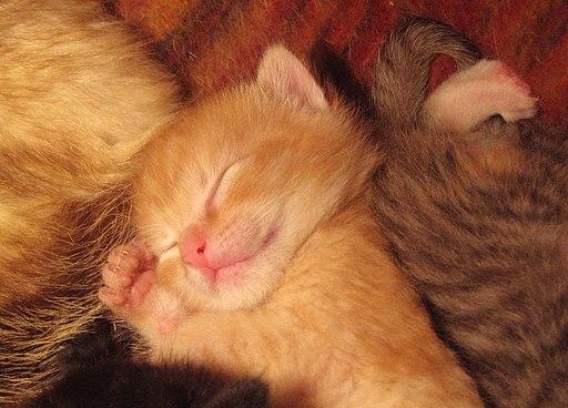 Sleeping baby cat
