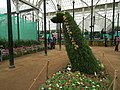 Snap from Lalbagh Flower Show Aug 2013 8157.JPG