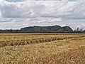 South Plantation - geograph.org.uk - 494362.jpg