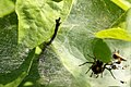 Spider (9225116692).jpg