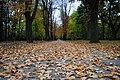 Spomenik prirode Park Blandaš u Kikindi 05.JPG