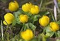Spring is coming (16406697089).jpg