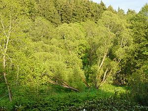 Wurzbach - Image: Stadtpark Wurzbach