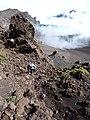 Starr-161122-0347-Pellaea ternifolia-along rim view Crater with Kim-West Rim Haleakala National Park-Maui (30505599564).jpg