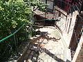 Stepenište na Gardošu.JPG