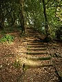 Steps in Chapel Hill Woods - geograph.org.uk - 1018549.jpg
