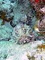 Stonefish on French Reef, Key Largo (15274723309).jpg