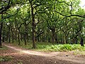 Strawberry Hill Heath - geograph.org.uk - 539848.jpg