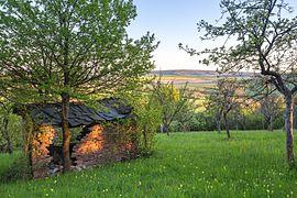 Streuobstwiese mit Schlüsselblumen im Naturschutzgebiet 'Gleistalhänge' bei Jena.jpg