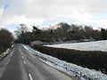 Stubber Hill Plantation, Stubton. - geograph.org.uk - 95867.jpg