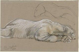Studies van een liggende ijsbeer