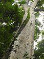 Sulawesi trsr DSCN0317.JPG