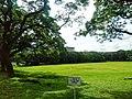 Sunken Garden, U.P. Diliman, Quezon City (2).jpg