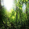 Sunlight passing trough trees.jpg