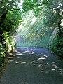 Sunlight penetrates the lane. - geograph.org.uk - 484692.jpg