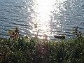 Sunshine Tegernsee.jpg