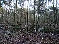 Swamp next to the Teufelsbruch swamp in winter 3.jpg