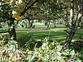Swindon Golf Course View - geograph.org.uk - 1021754.jpg