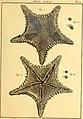 Tableau encyclopédique et méthodique des trois règnes de la nature (1791) (14764928011).jpg