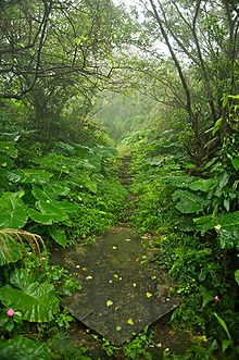 Photograph of an abandoned mining trail in Taiwan lined with shrubs and trees
