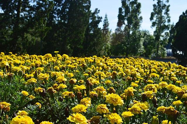 taman bunga nasional