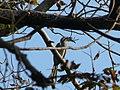 The Hornbill Toots.jpg