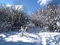 The Saleve during Winter - panoramio - Patrick Nouhailler's… (1).jpg