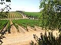 The Vineyards (25690087).jpeg