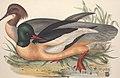 The birds of Europe (1837) (14727672866).jpg