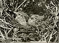 The birds of Yorkshire - being a historical account of the avi-fauna of the County (1907) (14755132652).jpg