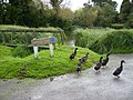 The pond with ducks at Wood End, Nash - geograph.org.uk - 256907.jpg