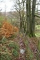 The steep and narrow footpath from the Coniston road leading to Skelwith Bridge - geograph.org.uk - 1595064.jpg
