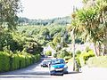 The sylvan Shan Slieve Drive, Newcastle - geograph.org.uk - 1471547.jpg
