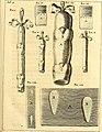 Theodori Kerckringii, Doctoris medici Opera omnia anatomica - continentia Specilegium anatomicum, Osteogeniam foetuum, nec non Anthropogeniae ichnographiam - accuratissimis figuris aeri incisis (14595127707).jpg