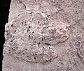 Theropod dinosaur footprint in sandstone (Kayenta Formation or Navajo Sandstone, Lower Jurassic; Potash-Poison Spider dinosaur tracksite, Williams Bottom, west of Moab, Utah, USA) 6 (32808075420).jpg