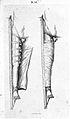 Thigh splints Wellcome L0003146.jpg