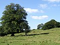 Thorpe Farm near Skendleby - geograph.org.uk - 551524.jpg