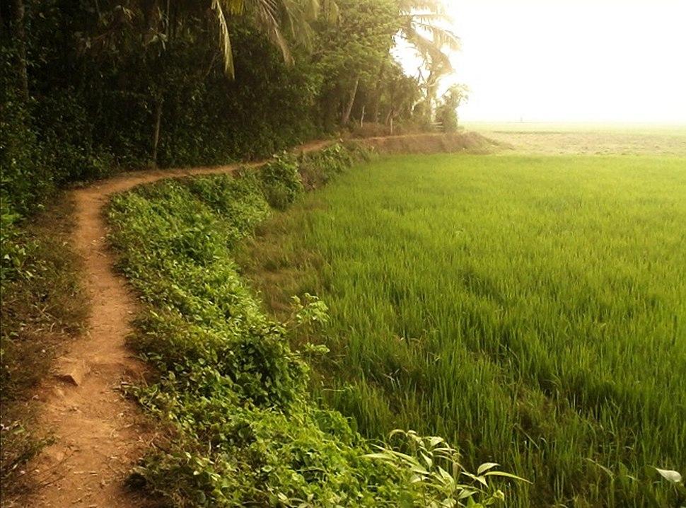 Thottu Varambu
