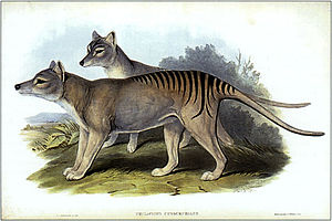 Henry Constantine Richter - Thylacinus cynocephalus, after Gould, 1845