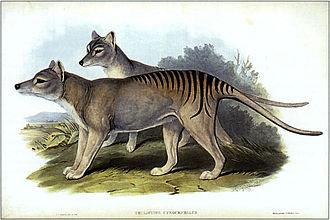 Cascade Brewery - Image: Thylacinus cynocephalus (Gould)