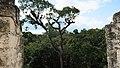 Tikal National Park-56.jpg