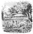 Tobacco Plantation 1855.jpg