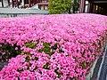 Tokyo03 flowers 800.jpg