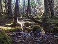 Tongass Lena Forest 73b.jpg
