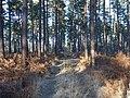 Track in Swinley Forest - geograph.org.uk - 114979.jpg
