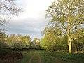 Track through Ditton Park Wood - geograph.org.uk - 1845169.jpg