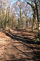 Track through woodland on Down Hill, Slad - geograph.org.uk - 114756.jpg